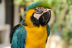 Bird parrot. Isolated on green Royalty Free Stock Photos