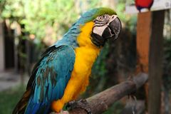 Bird parrot Royalty Free Stock Photo