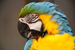 Bird parrot Royalty Free Stock Images