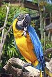 Bird Parrot in Bali Royalty Free Stock Photos
