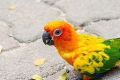 The bird parrot beautiful in the zoo Royalty Free Stock Photography