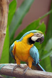 Bird Parrot royalty free stock image