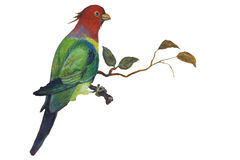 Bird parrot on a branch royalty free stock images