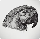 Bird parrot, hand drawing, vector illustration. Stock Photo