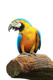 Bird parrot isolated Stock Photos
