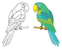 Bird parrot on a perch Royalty Free Stock Image