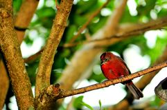 Bird, Passerine perched on branch in aviary Stock Image