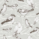 Bird pattern. With sparrow, pigeon, bullfinch, titmouse. Background vintage bird and branch Stock Images