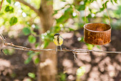The bird pecks seeds from the feeders. Feeder out of a tin can. Titmouse.  stock photos