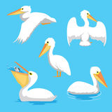 Bird Pelican Poses Cartoon Vector Illustration royalty free illustration