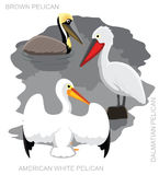 Bird Pelican Set Cartoon Vector Illustration Royalty Free Stock Photography