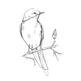 Bird pencil grey sketch vector illustration Stock Image
