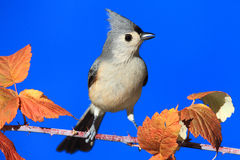 Bird On A Perch Royalty Free Stock Image