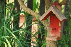 Bird Perch Stock Photos
