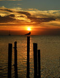 Bird on perch at Sunset stock photo