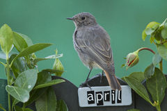 Bird perched on a April decorated fence Stock Images