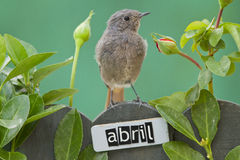 Bird perched on a April decorated fence Stock Image