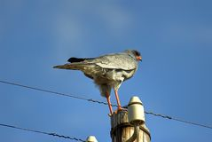 Bird perched atop pole Stock Image