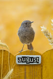 Bird perched on an August decorated fence Royalty Free Stock Photography