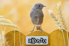 Bird perched on an August decorated fence Stock Image