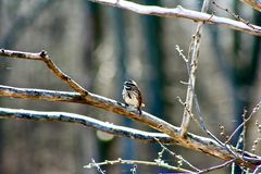 Bird perched on branch at Cherokee Marsh Royalty Free Stock Images