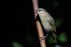 Bird perched on a branch Royalty Free Stock Photos