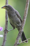 Bird perched in branches Stock Photo