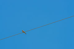 The bird perched on a cable line on sky background. The Dove, bird perched on a cable line on sky background Royalty Free Stock Image