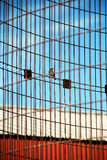 Bird perched on corn crib Stock Photos