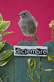 Bird perched on a December decorated fence Stock Photos