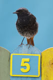 Bird perched on a fence decorated with number five Royalty Free Stock Images