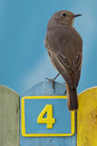 Bird perched on a fence decorated with number four Stock Images