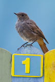 Bird perched on a fence decorated with number one Royalty Free Stock Photo