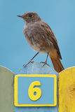 Bird perched on a fence decorated with number six Royalty Free Stock Photo