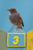 Bird perched on a fence decorated with number three Royalty Free Stock Photos