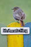 Bird perched on a fence decorated with the word bi Royalty Free Stock Image