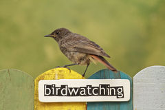 Bird perched on a fence decorated with the word birdwatching Stock Images