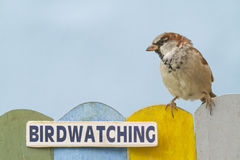 Bird perched on a fence decorated with the word birdwatching Stock Photography
