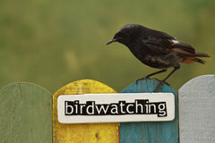 Bird perched on a fence decorated with the word birdwatching Royalty Free Stock Images