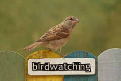 Bird perched on a fence decorated with the word birdwatching Royalty Free Stock Photos