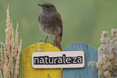Bird perched on a fence decorated with the word nature on spanish Stock Photos