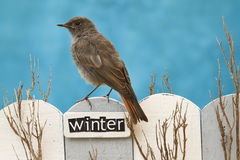 Bird perched on a fence decorated with the word Winter Royalty Free Stock Photography