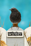 Bird perched on a fence decorated with the word Winter Royalty Free Stock Photo