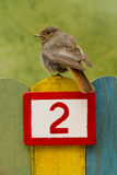 Bird perched on a fence with the number two painted on it Royalty Free Stock Photos
