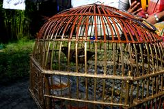 Bird Perched in a Hand Crafted Cage Stock Photo