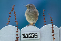 Bird perched on a January decorated fence Royalty Free Stock Photo