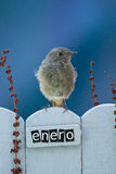 Bird perched on a January decorated fence Stock Images