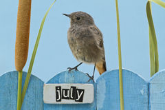 Bird perched on a July decorated fence Royalty Free Stock Images