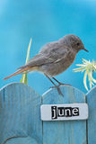 Bird perched on a June decorated fence Stock Photography