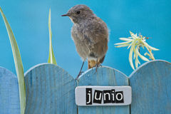 Bird perched on a June decorated fence Stock Photo